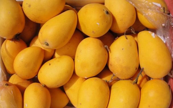 Free Mango Wallpaper Mango Wallpaper Download Wallpaperuse 1